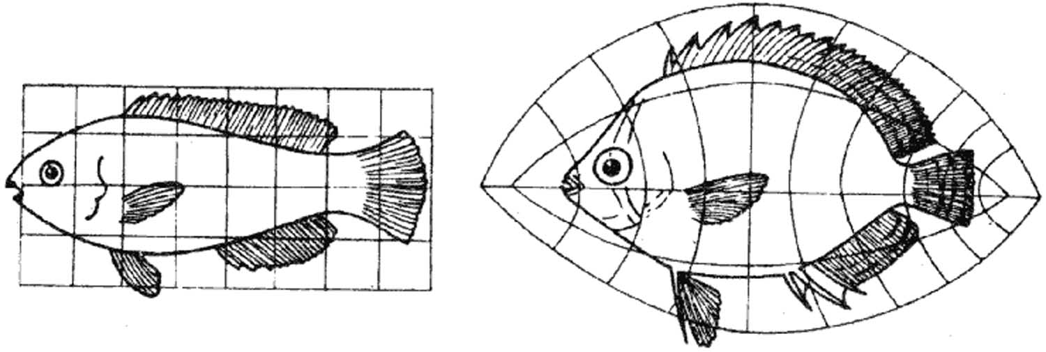 Left: sketch of a fish in a grid. Right: transformation of the fish showing the deformed grid